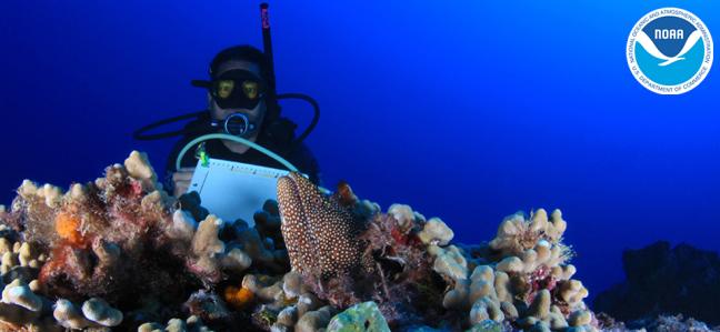 Hawaiian coral reefs